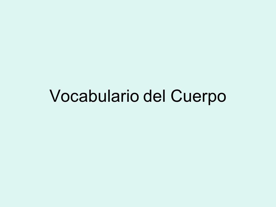 Vocabulario del Cuerpo