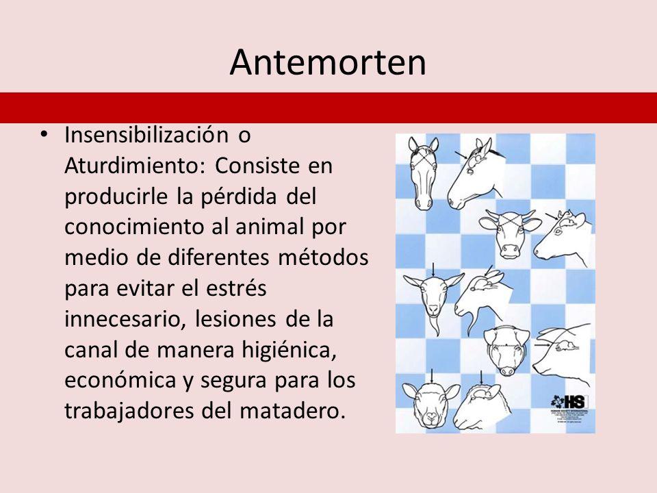 Antemorten