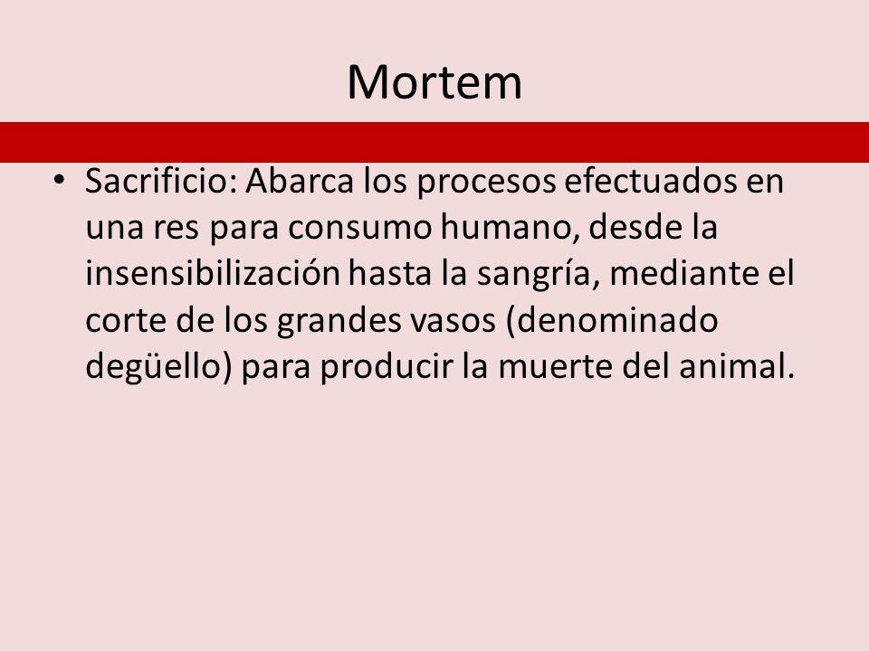 Mortem