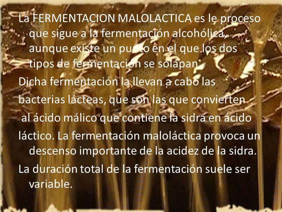 La FERMENTACION MALOLACTICA es le proceso que sigue a la fermentación alcohólica, aunque existe un punto en el que los dos tipos de fermentación se solapan.