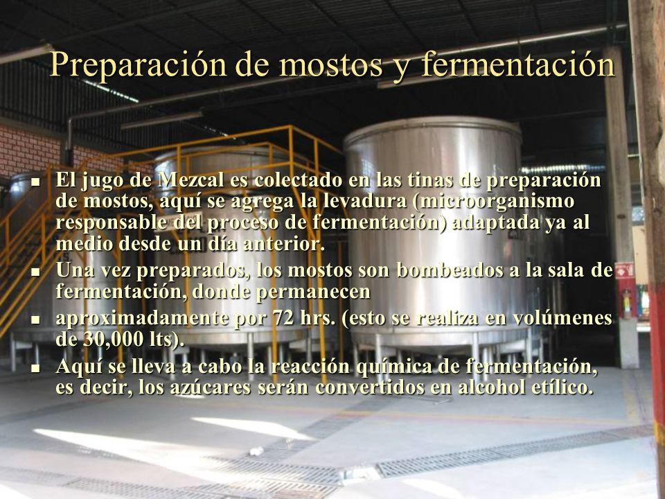 Preparación de mostos y fermentación