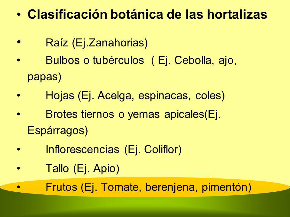 Clasificación botánica de las hortalizas Raíz (Ej.Zanahorias)