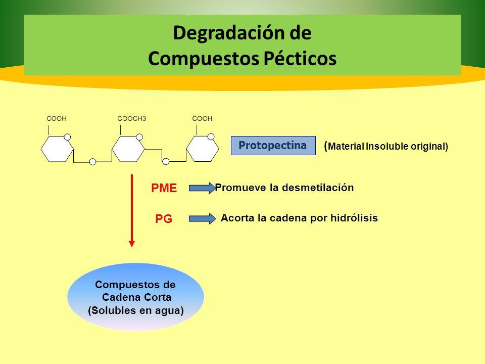 Degradación de Compuestos Pécticos