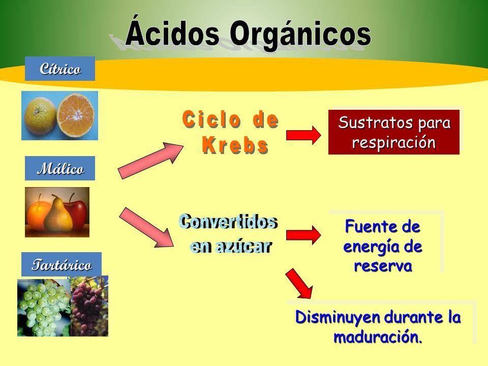 Ácidos Orgánicos Convertidos en azúcar Cítrico Málico Ciclo de Krebs
