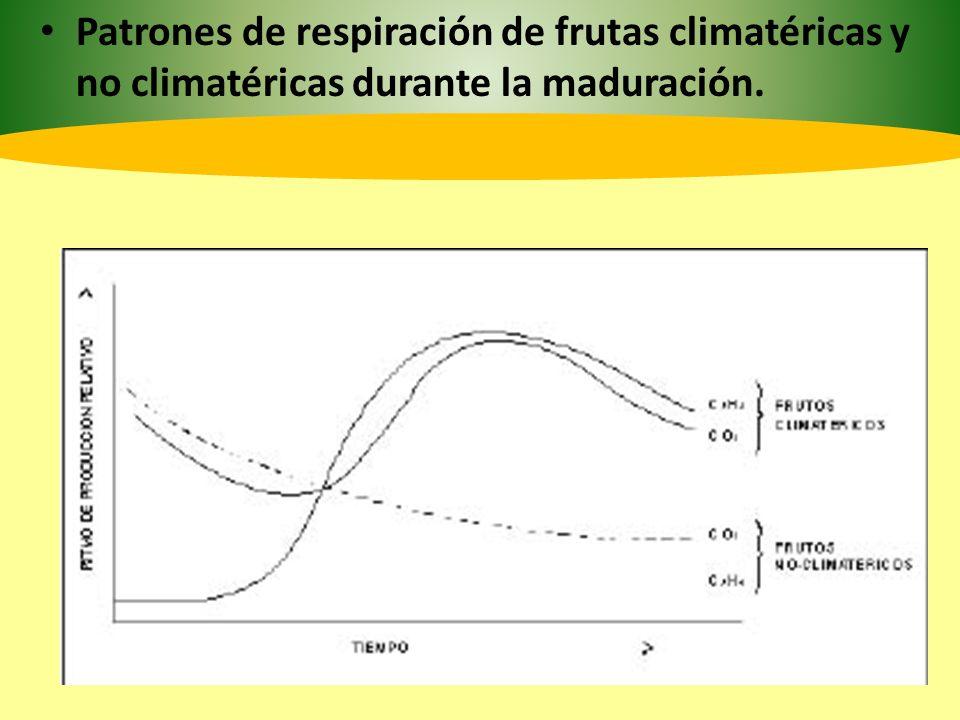 Patrones de respiración de frutas climatéricas y no climatéricas durante la maduración.
