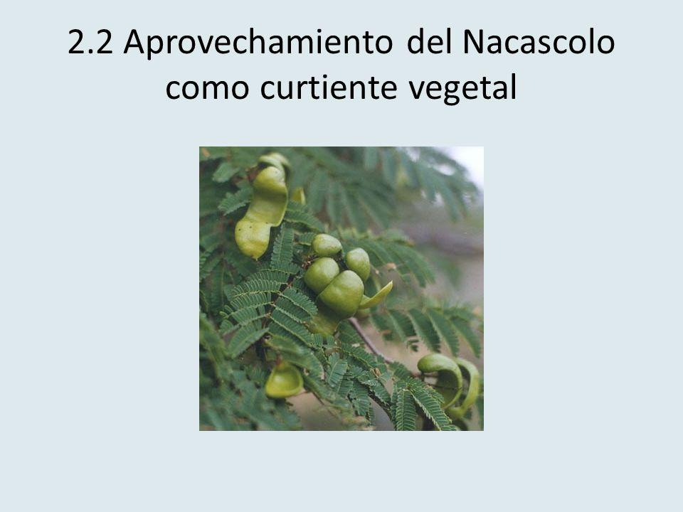2.2 Aprovechamiento del Nacascolo como curtiente vegetal