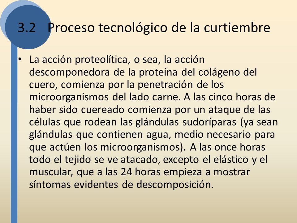 3.2 Proceso tecnológico de la curtiembre