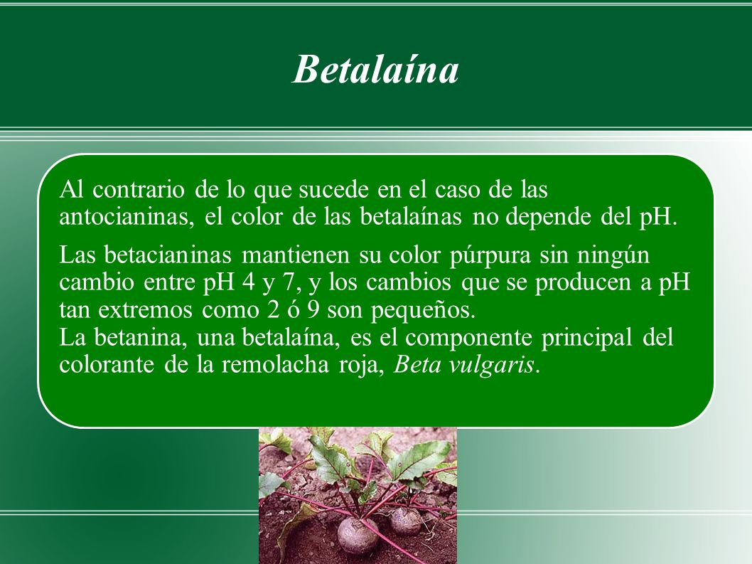 Betalaína