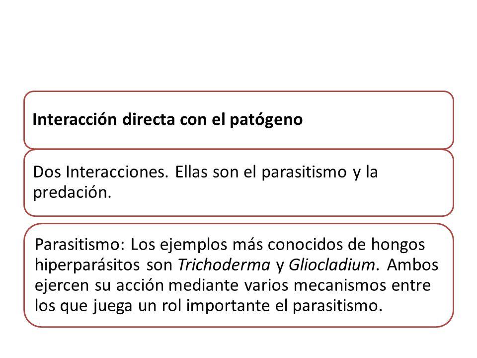 Interacción directa con el patógeno