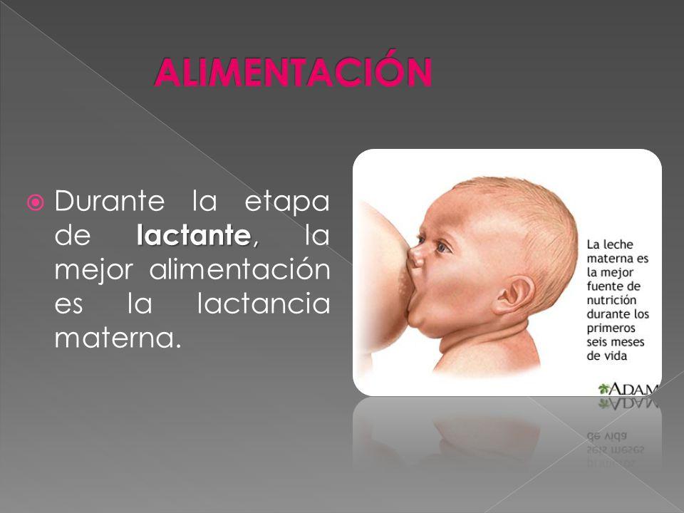 ALIMENTACIÓN Durante la etapa de lactante, la mejor alimentación es la lactancia materna.