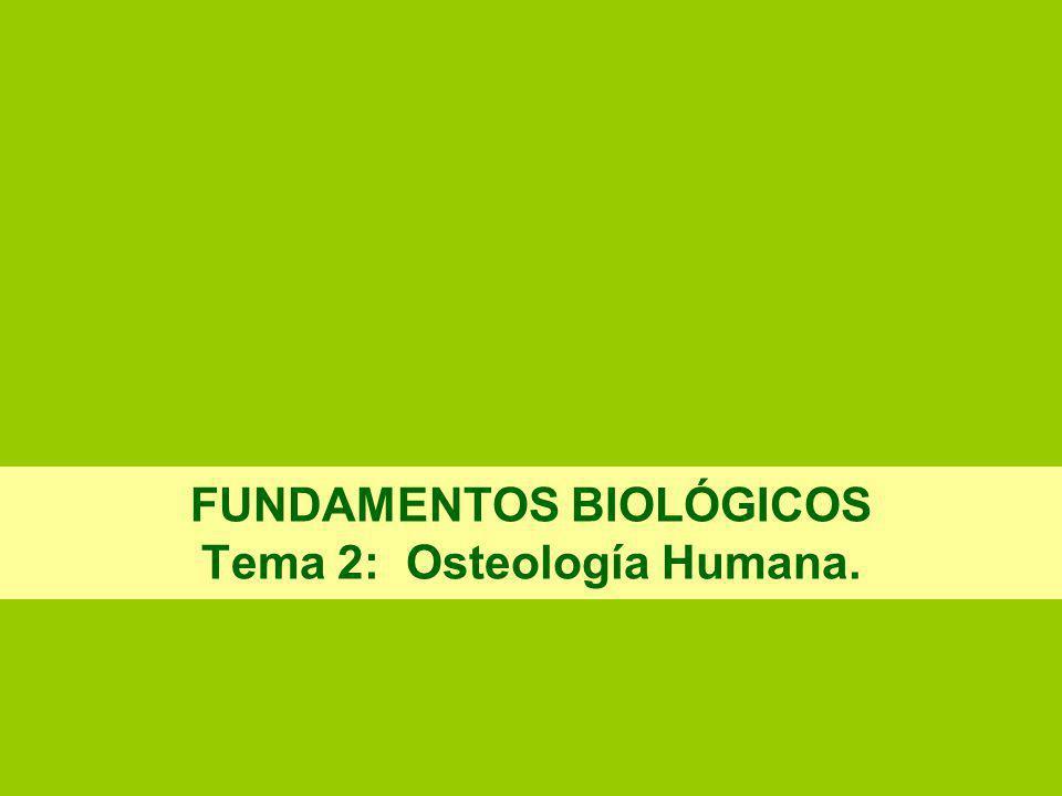 FUNDAMENTOS BIOLÓGICOS Tema 2: Osteología Humana.
