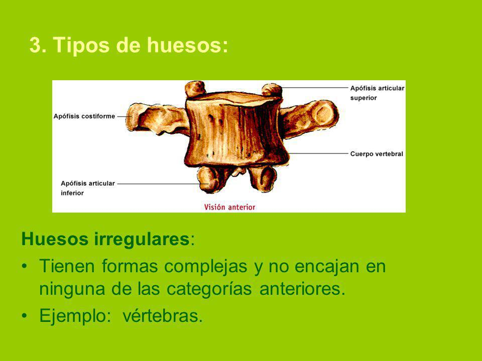 3. Tipos de huesos: Huesos irregulares: