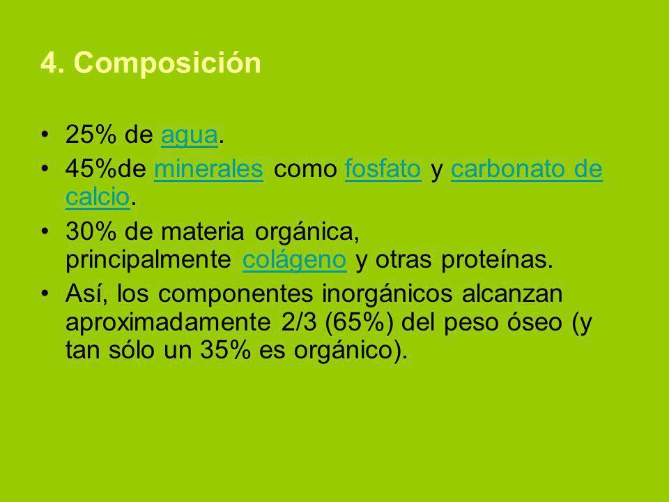 4. Composición 25% de agua. 45%de minerales como fosfato y carbonato de calcio. 30% de materia orgánica, principalmente colágeno y otras proteínas.