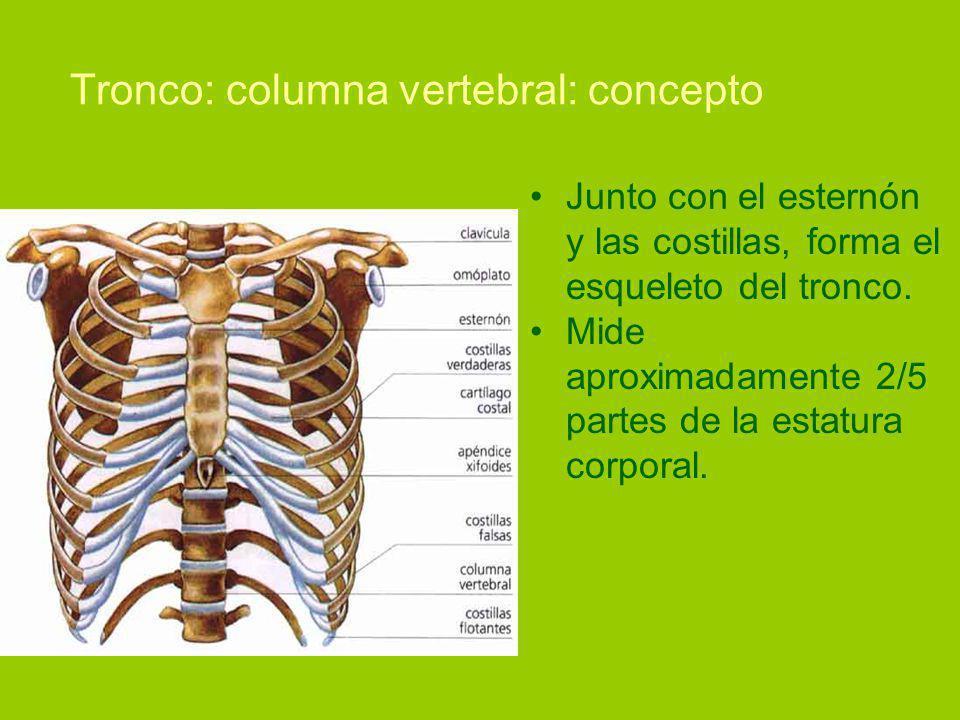 Tronco: columna vertebral: concepto
