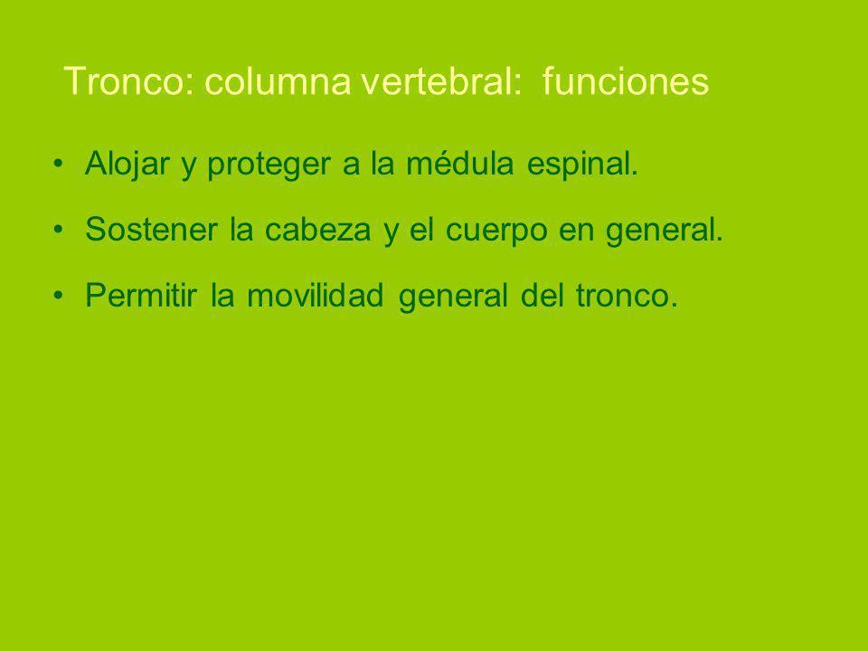 Tronco: columna vertebral: funciones