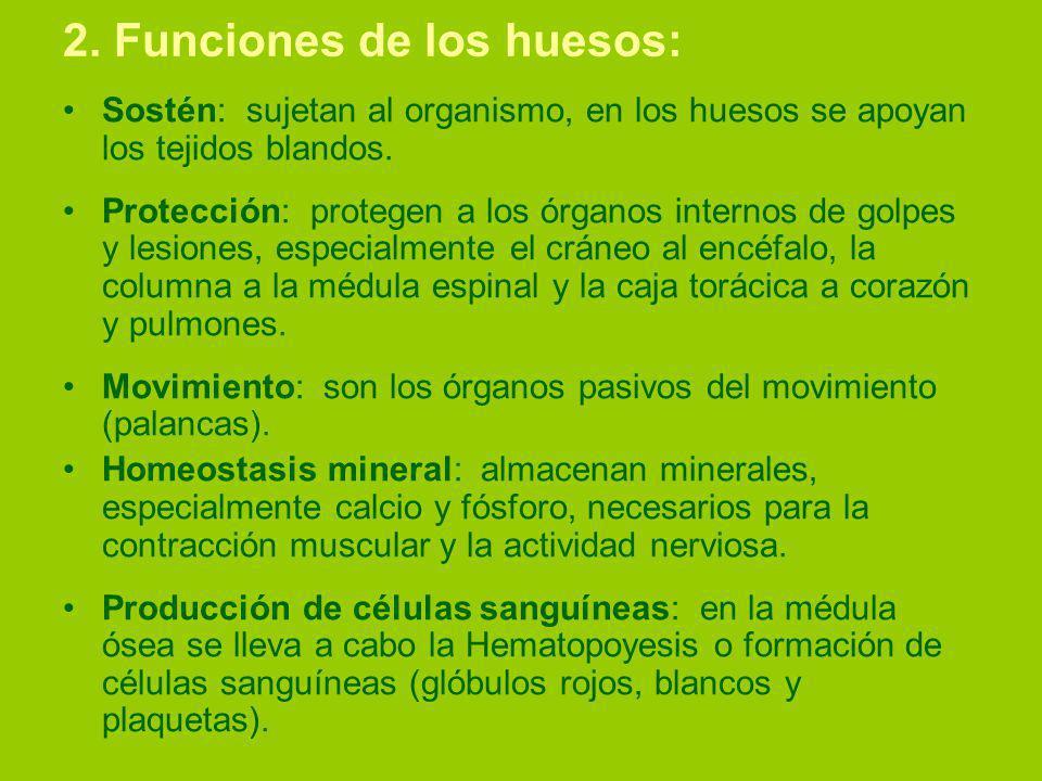 2. Funciones de los huesos: