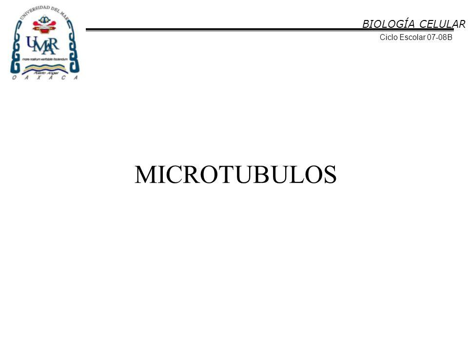 BIOLOGÍA CELULAR Ciclo Escolar 07-08B MICROTUBULOS