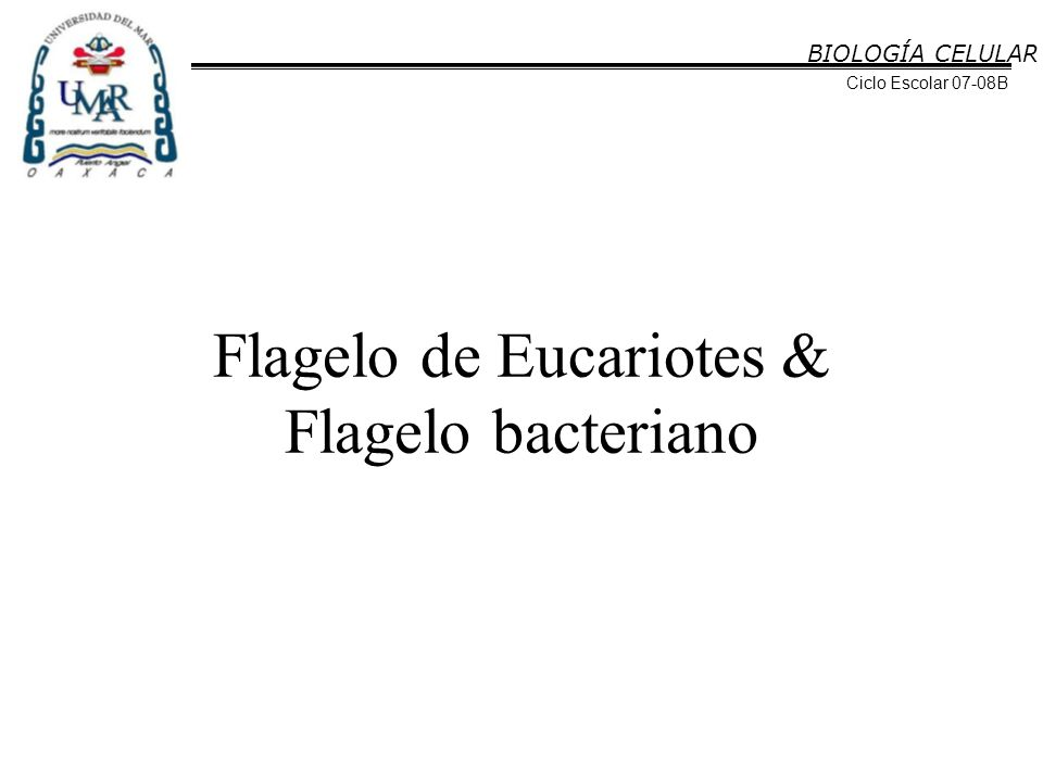 Flagelo de Eucariotes & Flagelo bacteriano