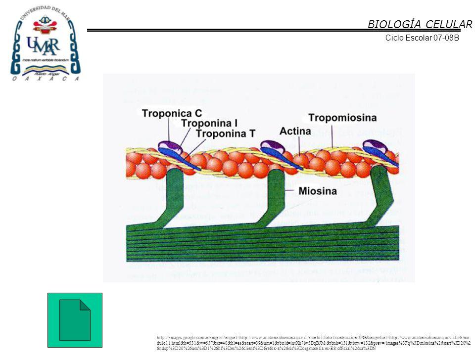 BIOLOGÍA CELULAR Ciclo Escolar 07-08B