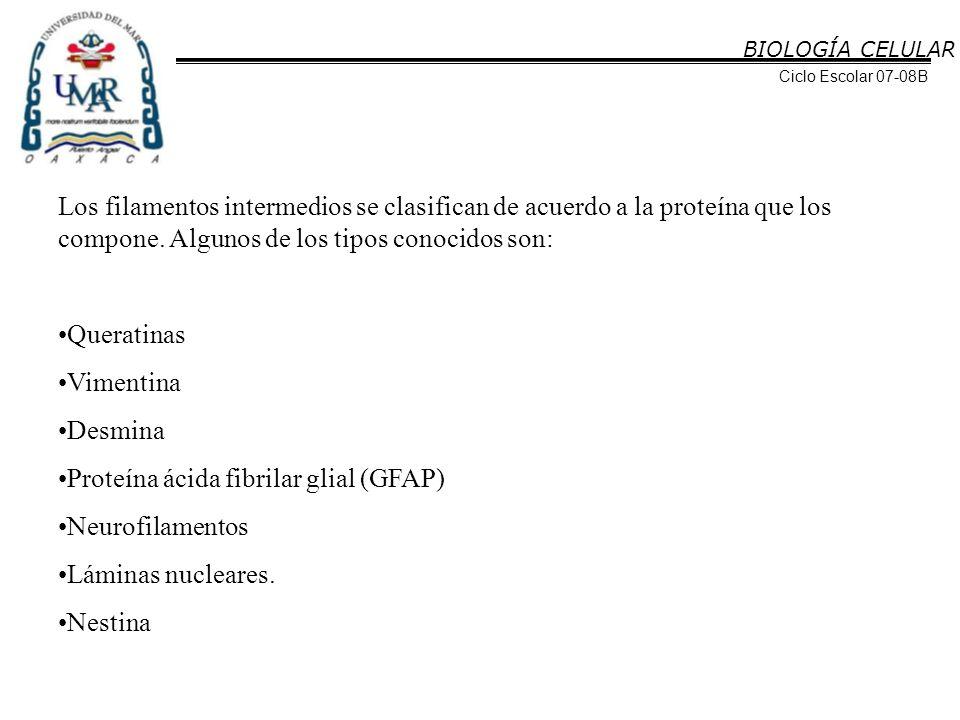Proteína ácida fibrilar glial (GFAP) Neurofilamentos