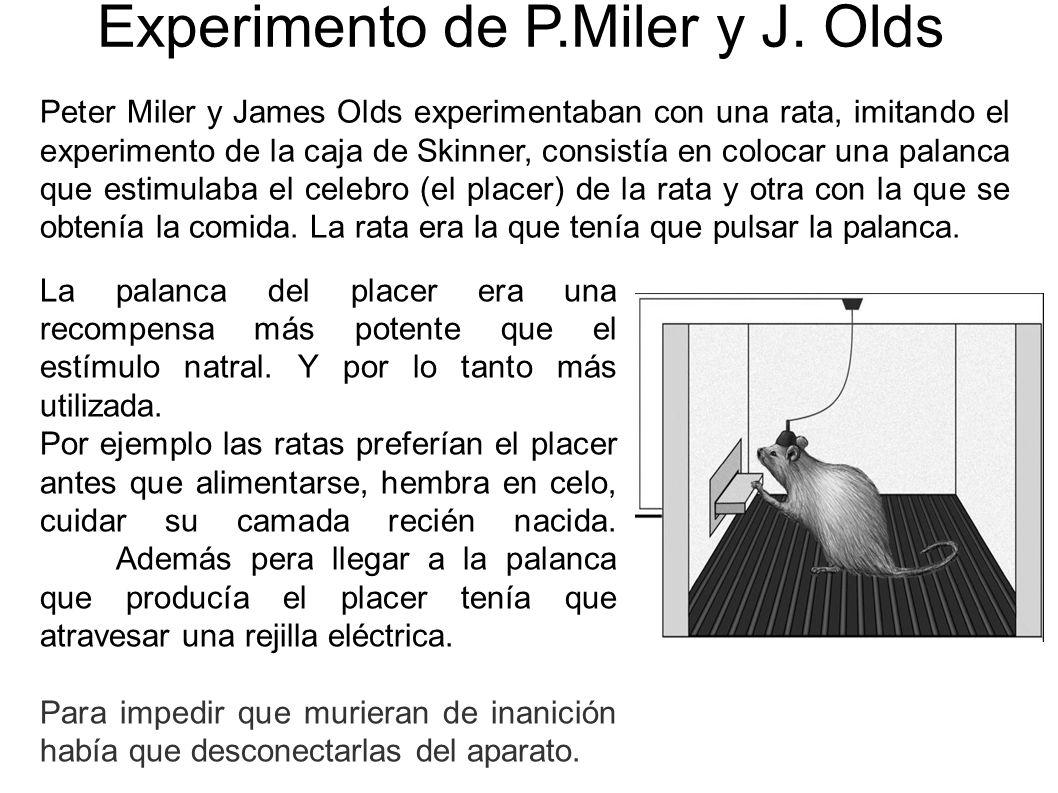 Experimento de P.Miler y J. Olds