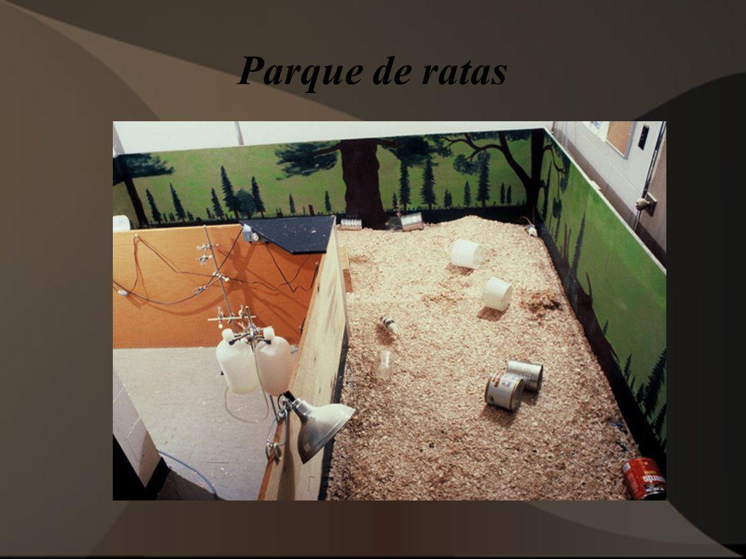 Parque de ratas