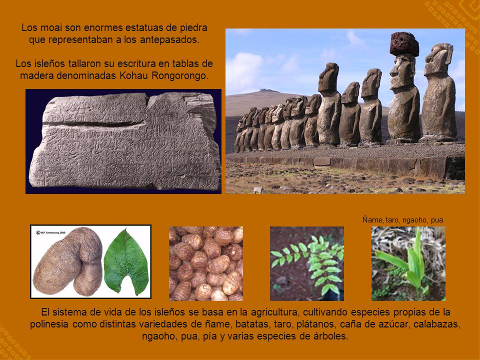 Los moai son enormes estatuas de piedra que representaban a los antepasados.