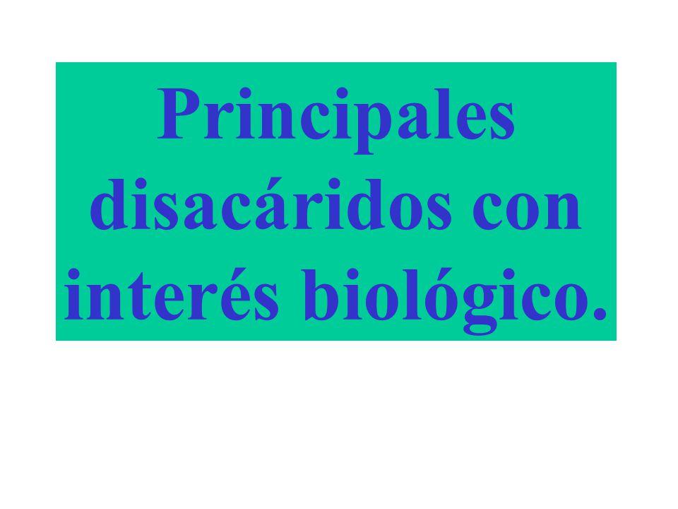Principales disacáridos con interés biológico.