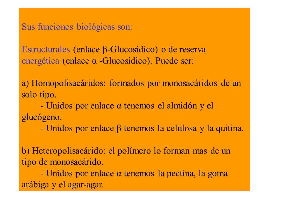 Sus funciones biológicas son: