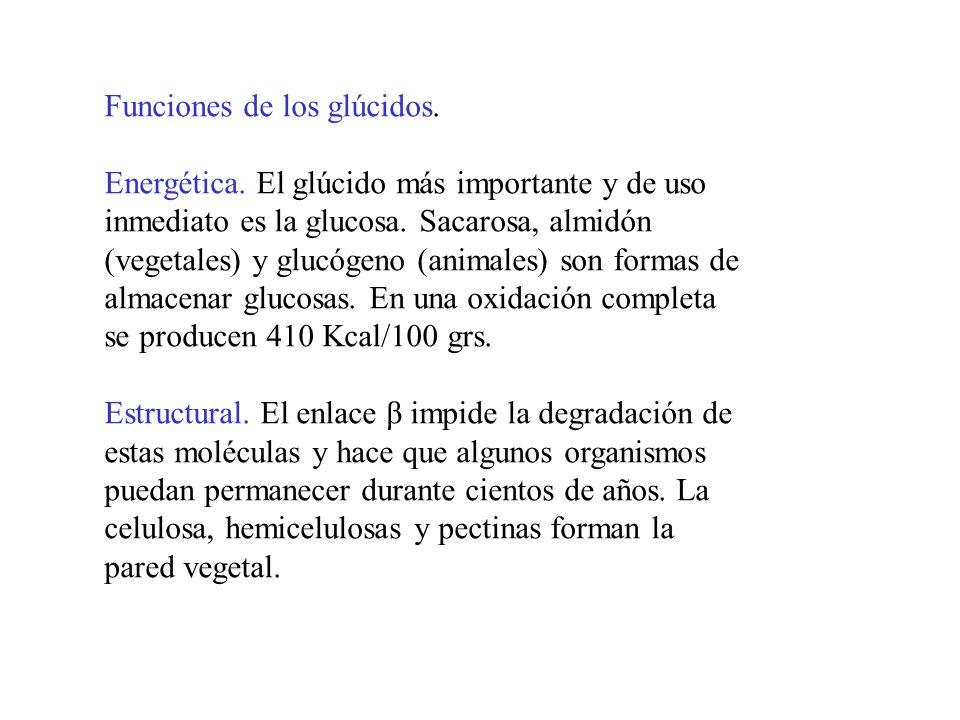 Funciones de los glúcidos.