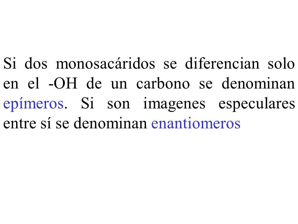 Si dos monosacáridos se diferencian solo en el -OH de un carbono se denominan epímeros.