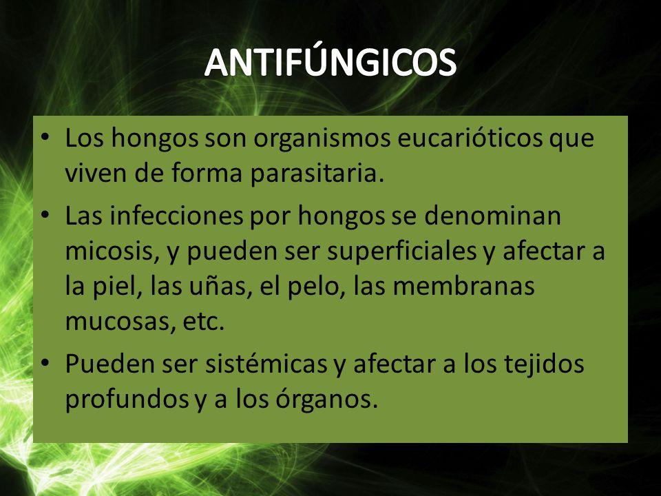 ANTIFÚNGICOS Los hongos son organismos eucarióticos que viven de forma parasitaria.