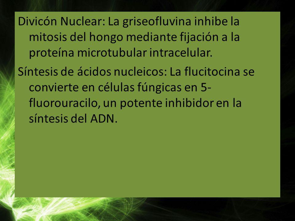 Divicón Nuclear: La griseofluvina inhibe la mitosis del hongo mediante fijación a la proteína microtubular intracelular.