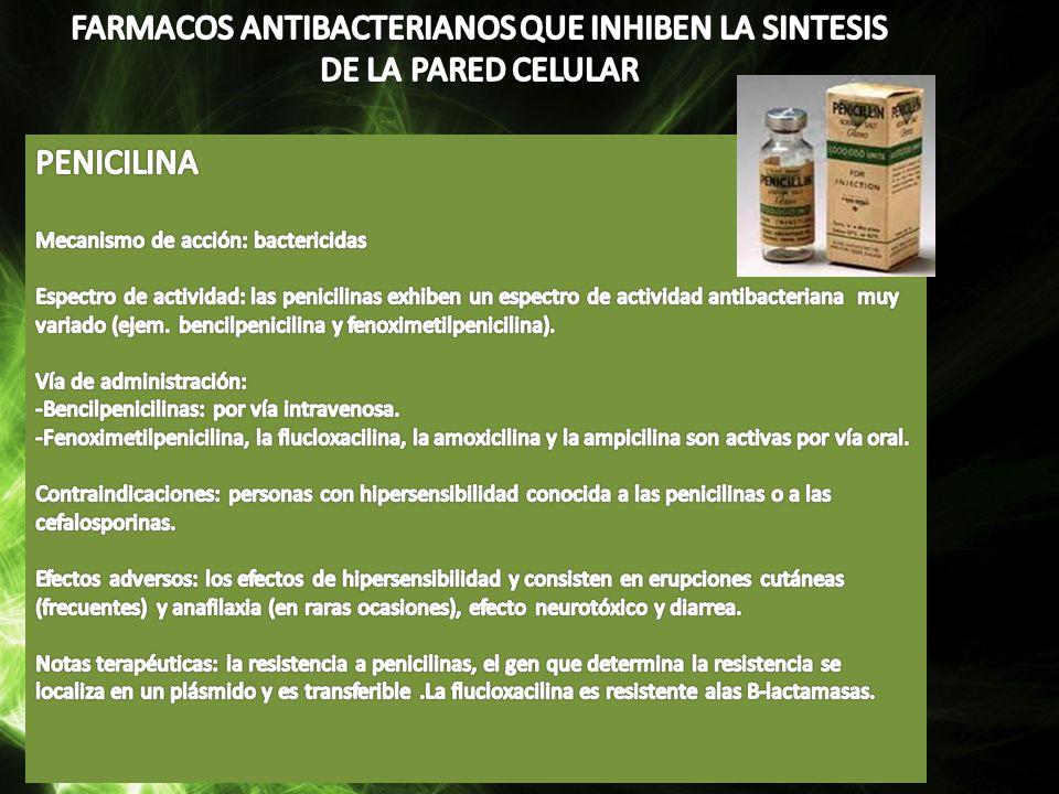 FARMACOS ANTIBACTERIANOS QUE INHIBEN LA SINTESIS DE LA PARED CELULAR