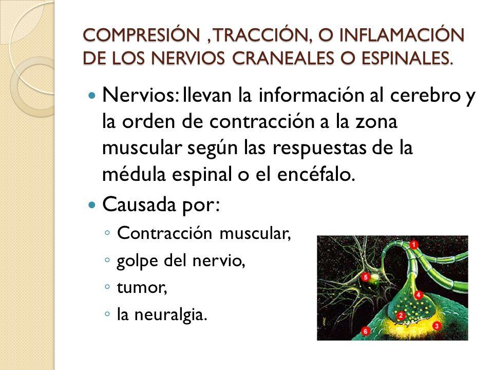 COMPRESIÓN , TRACCIÓN, O INFLAMACIÓN DE LOS NERVIOS CRANEALES O ESPINALES.