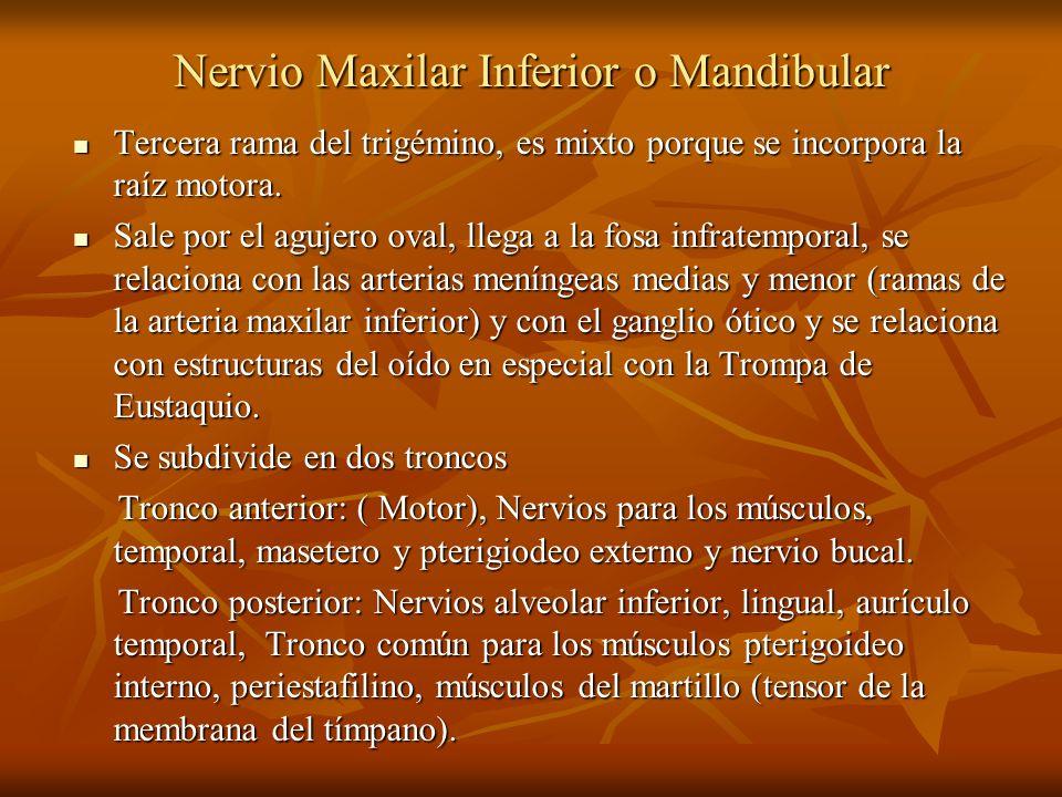Nervio Maxilar Inferior o Mandibular