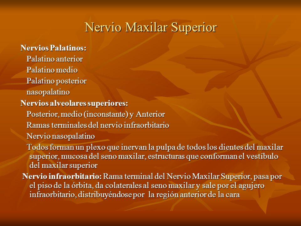 Nervio Maxilar Superior