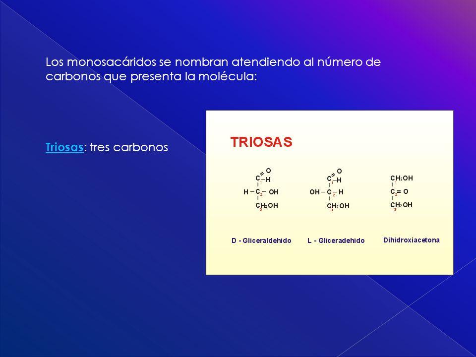 Los monosacáridos se nombran atendiendo al número de carbonos que presenta la molécula: