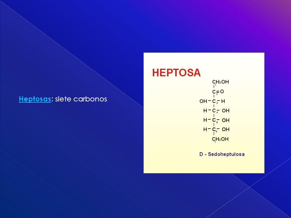 Heptosas: siete carbonos