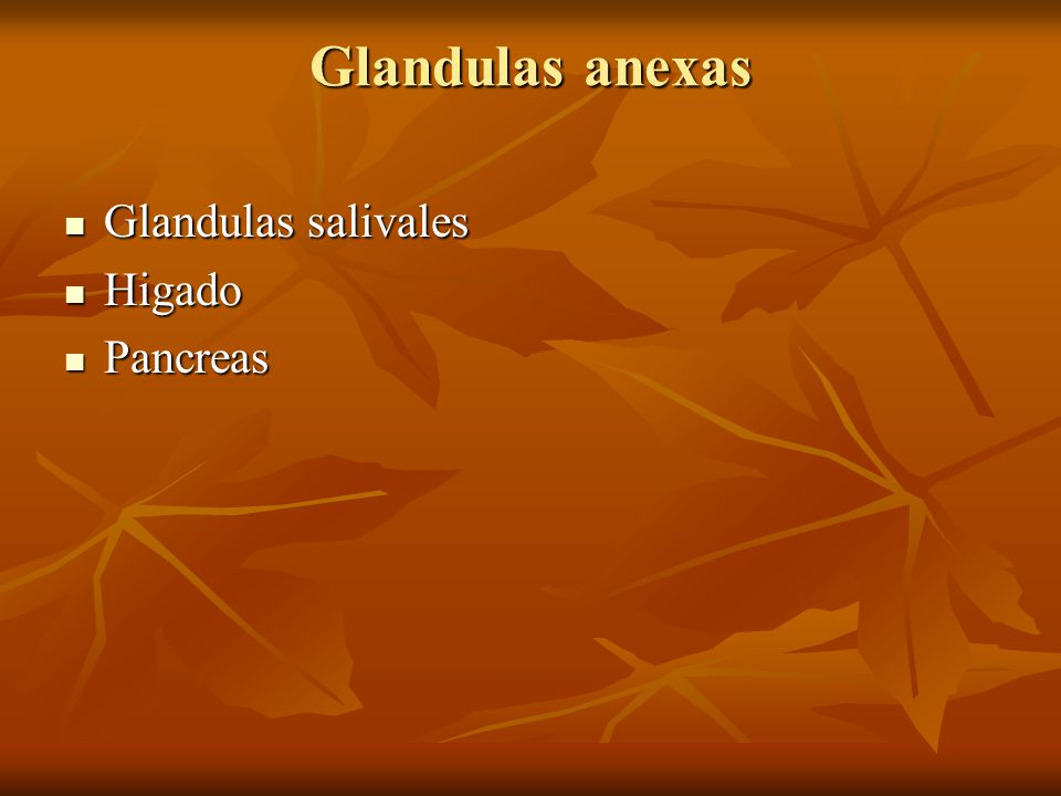 Glandulas anexas Glandulas salivales Higado Pancreas