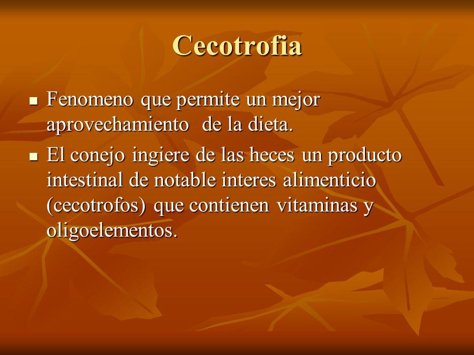 Cecotrofia Fenomeno que permite un mejor aprovechamiento de la dieta.