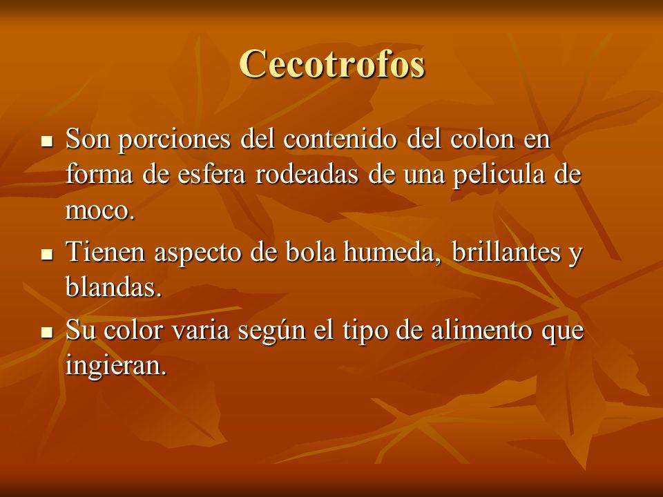 Cecotrofos Son porciones del contenido del colon en forma de esfera rodeadas de una pelicula de moco.