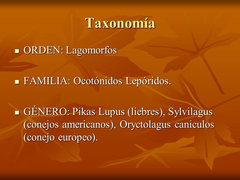 Taxonomía ORDEN: Lagomorfos FAMILIA: Ocotónidos Lepóridos.