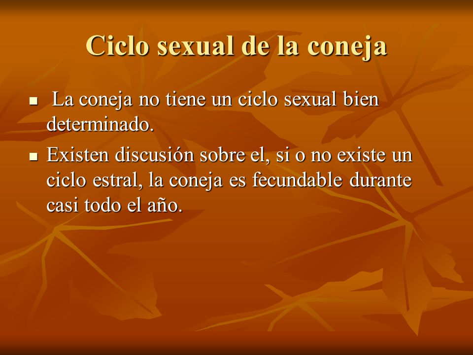 Ciclo sexual de la coneja