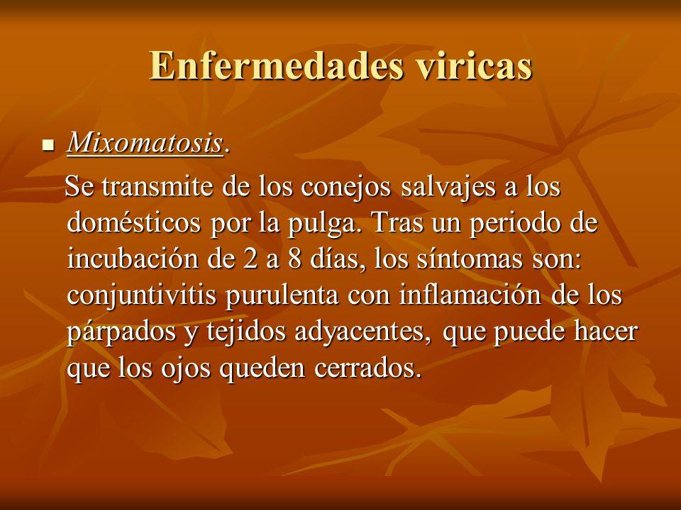 Enfermedades viricas Mixomatosis.
