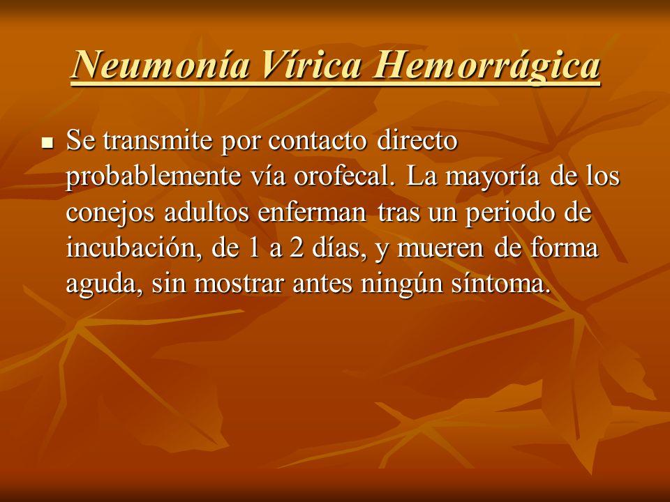 Neumonía Vírica Hemorrágica
