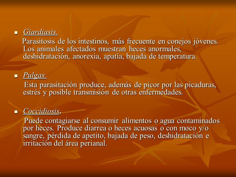 Giardiasis.