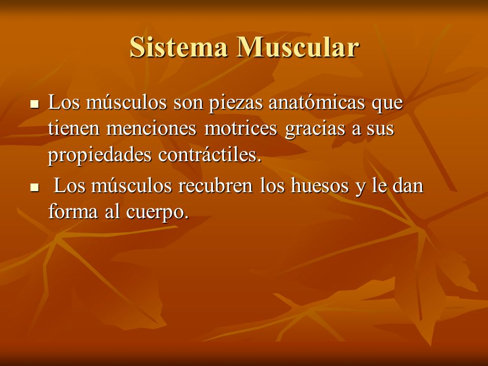 Sistema Muscular Los músculos son piezas anatómicas que tienen menciones motrices gracias a sus propiedades contráctiles.