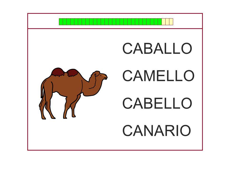 CABALLO CAMELLO CABELLO CANARIO