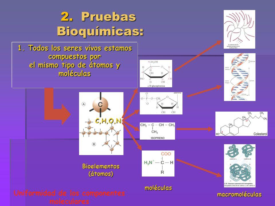 2. Pruebas Bioquímicas: 1. Todos los seres vivos estamos compuestos por. el mismo tipo de átomos y moléculas.